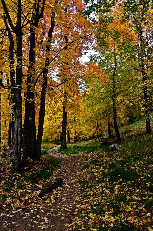 hhp_autumnpathways_0300