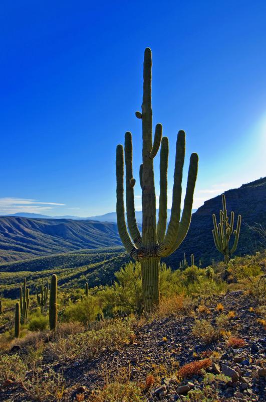 hhp_saguaromagic_3266